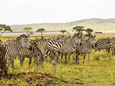 Serengeti by maasai-magic | unsplash.com